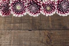 Dálias bonitas na configuração de madeira rústica do plano do fundo Roxo a Fotos de Stock