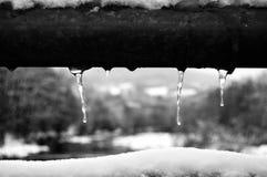 Détail hivernal Fotografia Stock