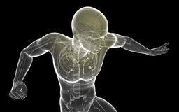 3D例证人体透明突出的脑子- Ilustracià ³ n 库存例证