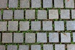Däcka belägger med tegel vägen med den gröna växten Arkivbilder