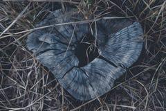 Däcka målningar efter den naturliga naturen begreppet av det naturliga loppet för gemenskapfotografi Arkivbild