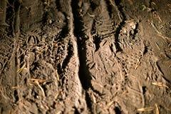 Däckmönsterfotspårskor arkivfoton