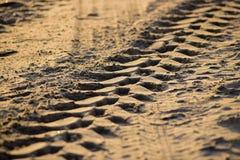 Däckspår i sand Royaltyfri Fotografi