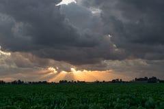 Dämmerige Strahlen oder Sonnenstrahlen über der niederländischen Landschaft an einem Sommerabend stockfotos