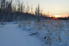 Dämmern ein heller Blitz der Sonne in einem wolkenlosen Winterhimmel des aufgehende Sonne über einem schneebedeckten Wald Stockfoto