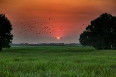 Dämmern Sie am Vogelkajeputbaum in Dong Thap Province, Vietnam Lizenzfreie Stockbilder