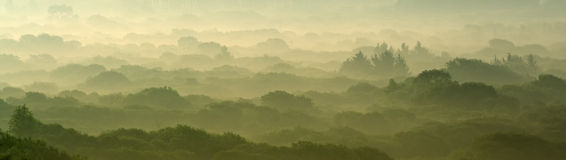 Dämmerung über dem Wald stockfotografie