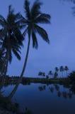 Dämmerung in dem Palmenfluß Stockfotos