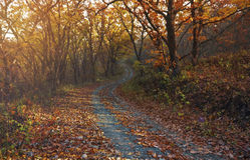 Dämmerung im Herbstwald Stockfotos