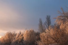 Dämmerung im Wald im Winter Lizenzfreie Stockfotografie