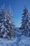 Dämmerung im Winterwald Stockfotos