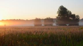 Dämmerung. Nebeliger Morgen im August lizenzfreies stockbild