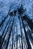 Dämmerungs-Baum-Überdachung stockbild