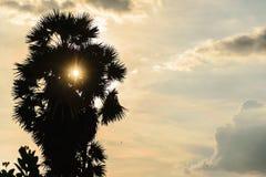 Dämmerungsbaum parm Sonnenaufgang Stockbilder