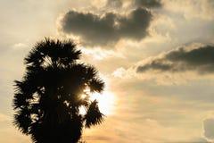 Dämmerungsbaum parm Sonnenaufgang Lizenzfreie Stockfotos