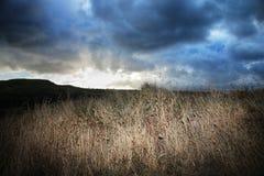 Dämmerungsgrasland Stockfotos