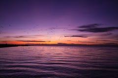 Dämmerungshimmel und Schattenbild von Vögeln einer Seemöwe bei Sonnenaufgang, bei Sonnenuntergang stockfoto