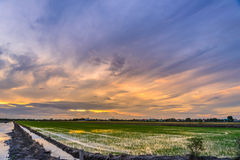 Dämmerungszeit auf dem Vorbereiten des Landes für das Pflanzen am Reisfeld Stockfoto