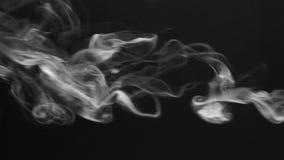 Dämpfen Sie Vereine und Rauchringe auf einem schwarzen Hintergrund stock video footage