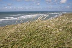 Dänische Küstenlinie Lizenzfreies Stockbild