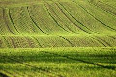 Dänische Landschaft Lizenzfreies Stockbild