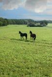 Dänische Pferde Lizenzfreies Stockfoto