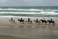 Dänische Pferde auf dem Strand Stockfotos