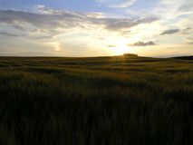 Dänische Sonnenunterganglandschaft Stockfotografie