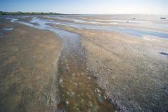 Dänische wilde Küstenlinie Lizenzfreies Stockfoto