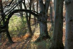Dänischer Herbst Stockfotografie