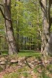 Dänischer Wald am Frühling, Seeland, Dänemark stockbild
