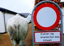 Dänisches Verkehrsschild und ein Nashorn in der Stadt lizenzfreie stockfotografie