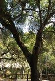 Därför trädet fotografering för bildbyråer