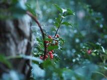 Dżu Dżu Garden stock photography