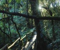 Dżungla wybieg Na Doi Inthanon Blisko Chiang Mai, Tajlandia, przy zmierzchem obrazy stock