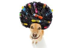 Dålig frisyr på hundkapplöpning arkivfoto