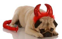 dålig hund arkivbild