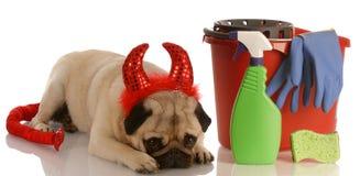 dålig hund Royaltyfria Foton