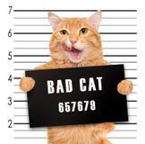 dålig katt royaltyfria foton