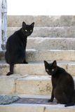dålig kattlycka Arkivfoton