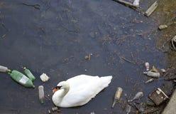 dålig swan arkivbilder