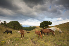 Dåligt väder på berglantgården Royaltyfri Fotografi