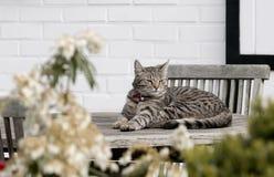 dåsa för katt royaltyfri bild