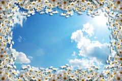 3d背景、天空蔚蓝和春黄菊 免版税图库摄影