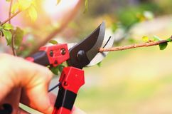 dé el árbol de la poda y las tijeras de podar en jardín con el backgr de la puesta del sol Fotografía de archivo libre de regalías