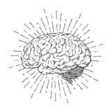 Dé el cerebro humano exhausto con arte anatómico correcto del resplandor solar Tatuaje o ejemplo de destello del vector del diseñ libre illustration