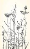 Dé el ejemplo exhausto de hierbas y de flores salvajes ilustración del vector