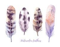 Dé el ejemplo exhausto del vector - colección de las plumas de la acuarela