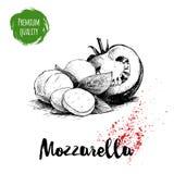 Dé el queso exhausto de la mozzarella del estilo del bosquejo con las hojas de la albahaca y la mitad del tomate Ingredientes de  Imagenes de archivo