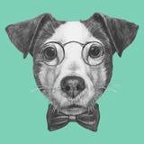Dé el retrato exhausto de Jack Russell con los vidrios y la corbata de lazo Foto de archivo